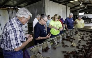 crawfish farm tour group